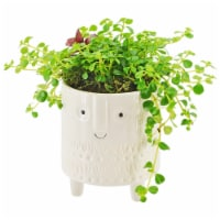 Foliage with Face Potted Plant