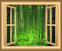 VWAQ 3D Window Wall Decals Forest Nature Scene Removable Wall Art - NW48 - 1