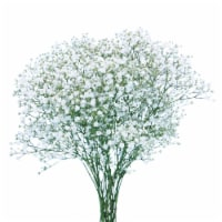 Gypsophillia Flowers