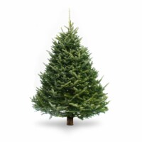 Dutchman Tree Farms Fraser Fir Fresh 6-7 Foot Christmas Tree