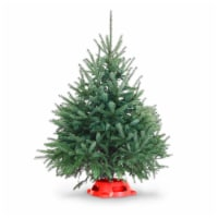 Dutchman Tree Farms Black Hill Spruce Tabletop Fresh 3-4 Foot Christmas Tree With Stand