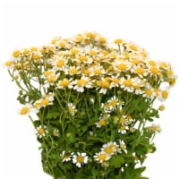 Galleria Farms Daisy Chamomile Filler Flower Bouquet