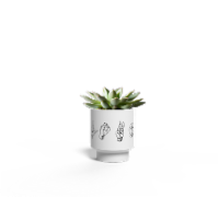 LiveTrends Sign Language Potted Succulent (Approximate Delivery is 2-5 Days)