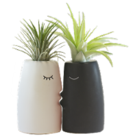 LiveTrends Kiss Me Potted Plants - 2 Pack - Assorted (Approximate Delivery is 2-5 Days)
