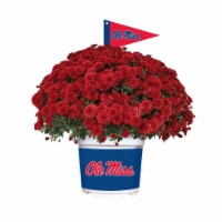 Sporticulture Mississippi Ole Miss Team Color Potted Mum - 3 qt