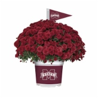 Sporticulture Mississippi State Bulldogs Team Color Potted Mum - 3 qt