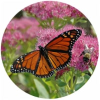 Andreas TR-KMB1 8 in. Kathy Miller Butterfly Trivet  Round - 3 Pack