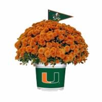 Sporticulture Miami Hurricanes Team Color Potted Mum - 3 qt