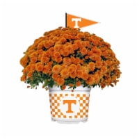 Sporticulture Tennessee Volunteers Team Color Potted Mum - 3 qt