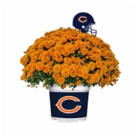 Sporticulture Chicago Bears Team Color Potted Mum - 3 qt
