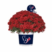 Sporticulture Houston Texans Team Color Potted Mum - 3 qt