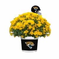 Sporticulture Jacksonville Jaguars Team Color Potted Mum - 3 qt