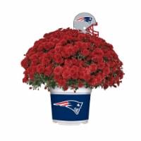 Sporticulture New England Patriots Team Color Potted Mum - 3 qt