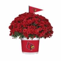 Sporticulture Louisville Cardinals Team Color Potted Mum - 3 qt