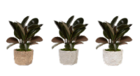 Monteverde Foliage House Plant - Assoirted