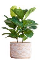 Large Mishima Potted Plant - Assorted