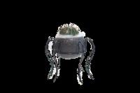 Arachnid Spell Cactus - 7.5 in