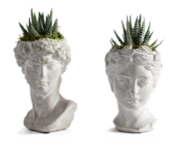 LiveTrends When in Rome Succulents - Assorted