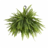 Boston Fern Live Indoor Outdoor in Hanging Basket 1 Count (Approximate Delivery is 2-7 Days)