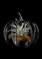 Wire Pumpkin Plant Holder - Black - 4 in