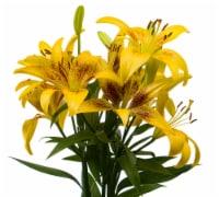 Tango-LA´s Lily Box - 3 stem
