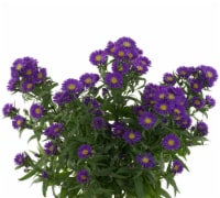 Aster Mix Celebration Bouquet