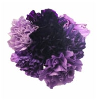 Purple Rainbow Carnation