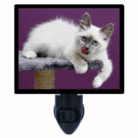 Cat Decorative Photo Night Light. Is It Dinner Yet? Free Extra Picture For Lights. - 1