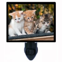 Cat Photo Night Light. The Next Generation. Cats. Kittens. Free Extra Picture For Lights. - 1