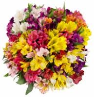 Rainbow Alstroemeria - 15 stems
