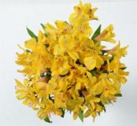 Alstroemeria Lily Bunch