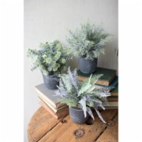 Set Of 3 Fern Succulents With Round Grey Pots. Approx 9 D X 10 T - 1