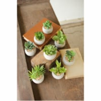 Set Of 8 Small Succulents With Round Cement Pot. Approx 2.5  X 3 - 1