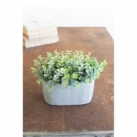 Artificial Eucalyptus In A Cement Pot 4  X 8  X 8 T - 1