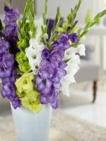 Bloomsz Gladiolus Gemstones Of The Garden Bulb Blend (15 pack)
