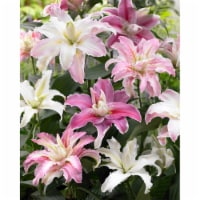 Double Flowering Fragrant Cut Flower Rose Lily Bulb Blend (6 pack)