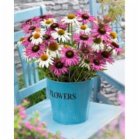 Butterfly Daisy Blend Roots (6 pack)