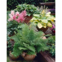 Three Great Shade Patio Perennial Collection Roots (3 pack)