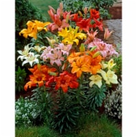Asiatic Lily Bulb Mixture - (6 pack)