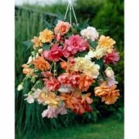 Pastel Hanging Basket Begonia Bulbs Mixed (5 pack) - 1