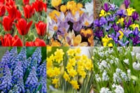 Wild Flower Bulb Mix - 100 Bulbs