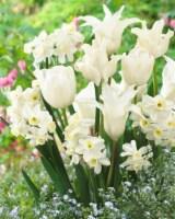 Blend White Valley - 10 Bulbs