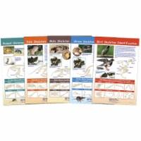 NewPath Learning 1567132 Bulletin Board Chart - Prey Identification - Set of 5 - Grade 5-8