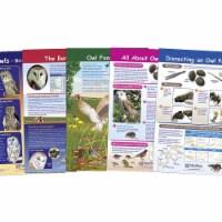 NewPath Learning 1567133 Bulletin Board - Owl & Owl Pellets - Set of 5 - Grade 5-8 - 1