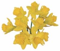 Field Daffodil Bunch