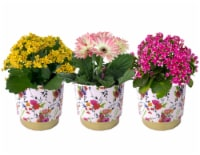 Blooming Plant in Floral Ceramic Pot - Assorted