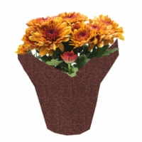 Potted Fall Chrysanthemums