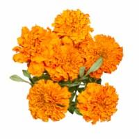 Marigold - 1 ct