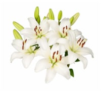 White Lily Combo 5 Stems