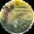 Lotus Foods Organic Brown Jasmine Rice Bowl Perspective: front
